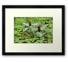 Wild North Carolina Trillium Framed Print