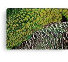 A Peacock's Back Canvas Print