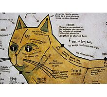 The Nine Carat Cat Photographic Print