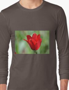 Backlit Red Tulip Long Sleeve T-Shirt