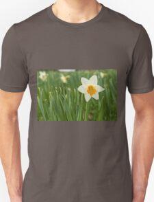 Lone Daffodil in spring T-Shirt