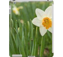 Lone Daffodil in spring iPad Case/Skin