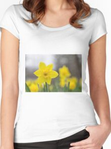 A lone daffodil in spring Women's Fitted Scoop T-Shirt