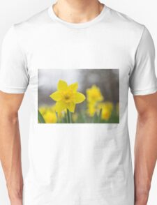 A lone daffodil in spring Unisex T-Shirt