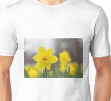 A lone daffodil in spring Unisex T-Shirt