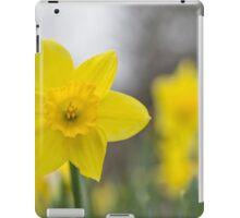 A lone daffodil in spring iPad Case/Skin