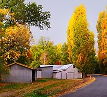 Country Lane, Tumut, New South Wales, Australia by Michael Boniwell