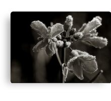 Canola Frost Canvas Print