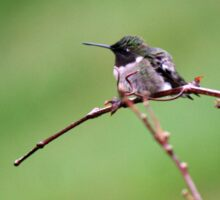 Chilly Hummingbird Sticker