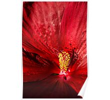 Passionate Ruby Silk Poster