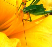 Grasshopper On A Flower  Sticker