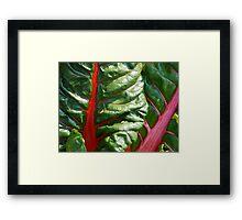 Natural Patterns Framed Print