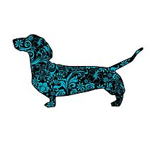 Dachshund blue by tiffanyo