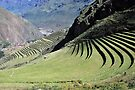 Terraces above the Sacred Valley by Alessandro Pinto