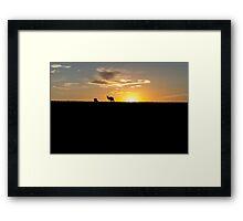 Silhouette of Kangaroos at  Sunset Framed Print