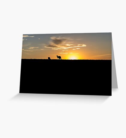 Silhouette of Kangaroos at  Sunset Greeting Card