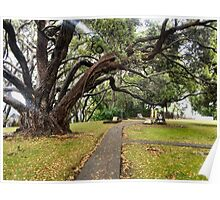 Autumn scenery at historical Tauranga Mission Cemetery Poster