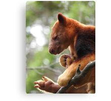 Goodfellow's Tree Kangaroo Canvas Print