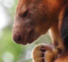 Goodfellow's Tree Kangaroo Sticker
