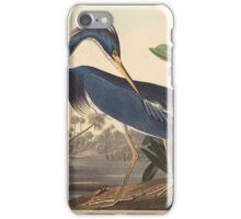 John James Audubon - Louisiana Heron 1834 iPhone Case/Skin