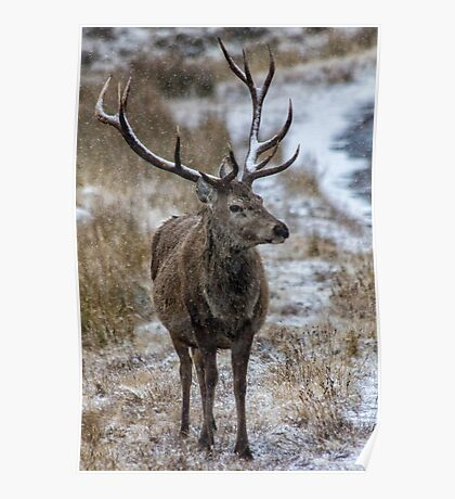 Twelve Pointed Stag in the Snow Poster