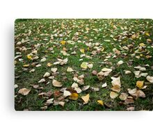 Yellow, orange and red autumn leaves  Canvas Print
