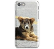 Stray Brown Dog on the Street iPhone Case/Skin