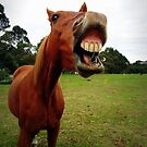 Horse smiley by Sharna Wood