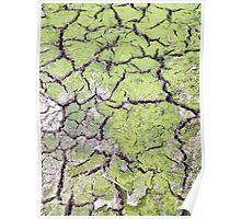 environmental concept, Water shortage and drought Dry cracked mud Poster
