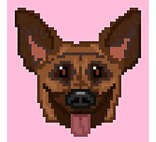 Pixel German Shepherd (Pink) Photographic Print