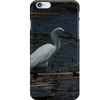 Snowy Egret Standing in Water iPhone Case/Skin