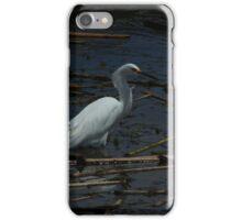 Snowy Egret Standing in Water iPhone Case/Skin