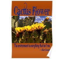 Prickly Pear Cactus Flowers and the Environment Poster