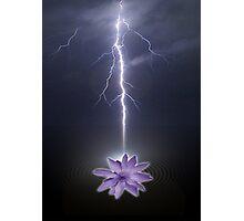 lotus love Photographic Print