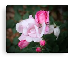 Roses In Different Stages Canvas Print