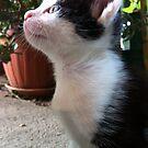 Little kitten by Ana Belaj
