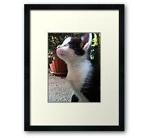 Little kitten Framed Print