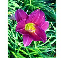 Bloomed Beauty  Photographic Print