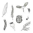Seeds and leaves by Aleksandra Kabakova