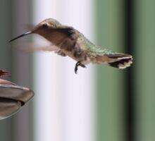 Precious Hummingbird Sticker