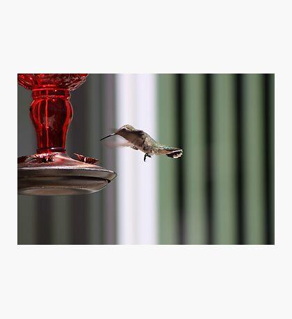 Precious Hummingbird Photographic Print
