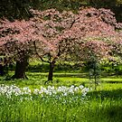 Blossom & Blooms by vivsworld