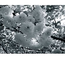 graveyard blossoms Photographic Print
