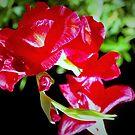Porch lilies by ♥⊱ B. Randi Bailey