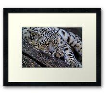 Sleeping Snow Leopard Framed Print