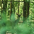 Deer Deep In The Woods by Rick  Friedle