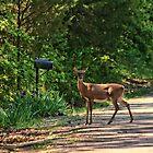 Deer Loves Flowers by Rick  Friedle