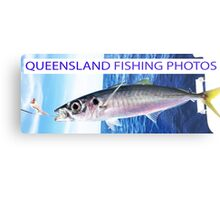Queensland Fishing Photos Metal Print
