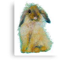 Bunny Rabbit painting on white background Canvas Print