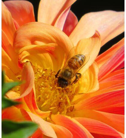 Golden Nectar Sticker